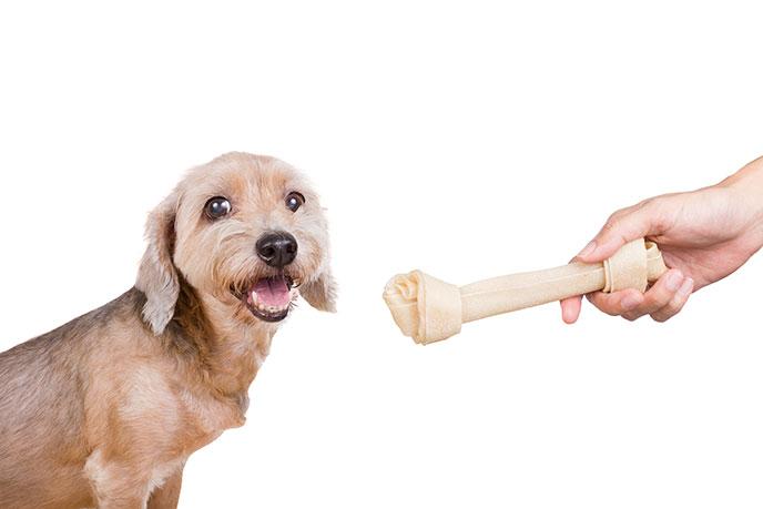 Dog receiving a treat