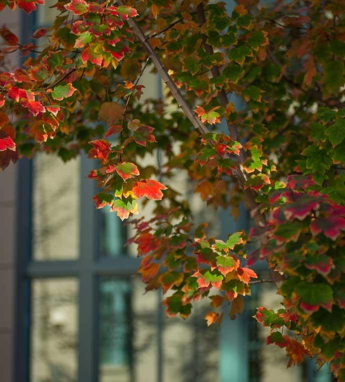 Fall foliage at Berkeley-Haas