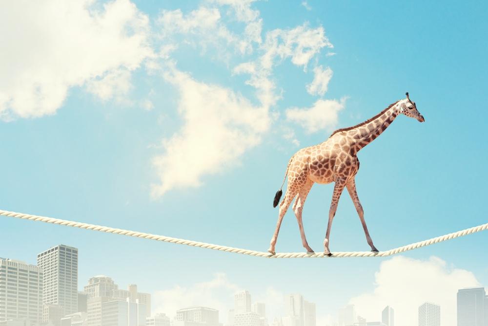 Image of giraffe walking on rope high in sky