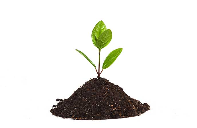 From seedling to startup